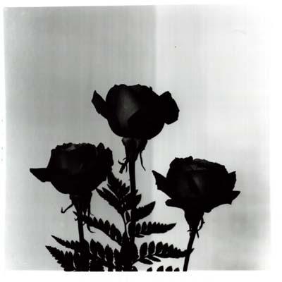 imagen de rosas negras y tristes